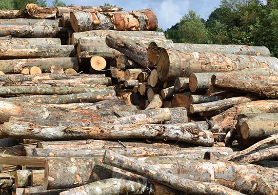 燃料用木質バイオマス集荷販売 緑化用木質バイオマス製造販売